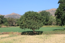 handsom tree with the greenest grass in all the lands of India