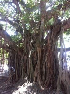 very nice tree