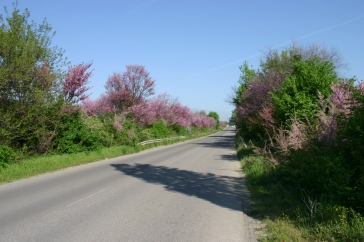 many roads block the view with extremely fragrant bushes blooming hard