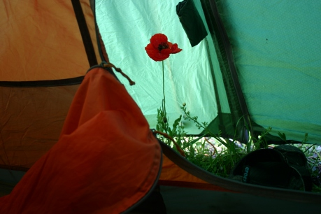 the unexpected bonus of using the red light when setting up camp, this poppy was invisible in the light until the morning when I realised that I have a friend in Full bloom..... i did feel like the little prince that morning :D