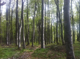 beautiful dense forests